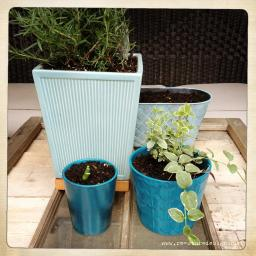 Spring Planting!